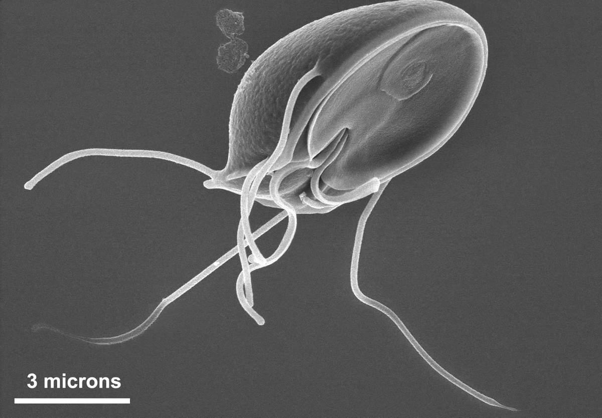 аллергия от паразитов форум