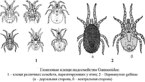 паразиты в суставах человека симптомы