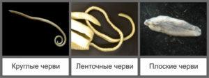 parazit-koshek-k-cheloveky