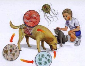 Заражение от животных