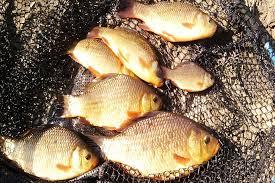 тщательно обрабатывайте рыбу